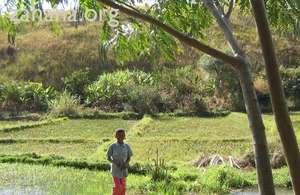 Rice field in Fiarenana