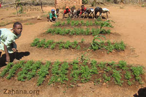The new beds planted with vegetables