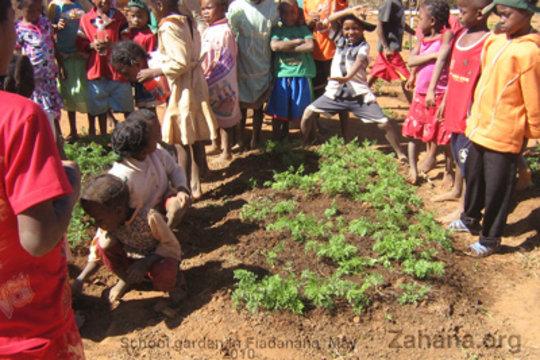 The students in the school garden