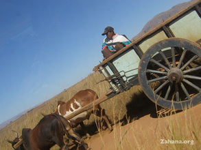 The typical carriage drawn by two zebu
