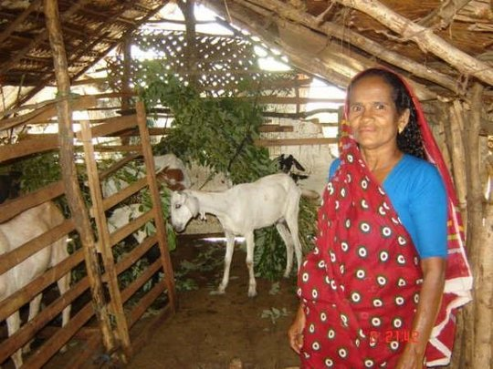 Goats for subsistence.