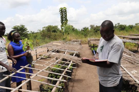 Ocaya tracking seedlings in the nursery