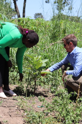 Julie and Robin checking on a farmer's seedling