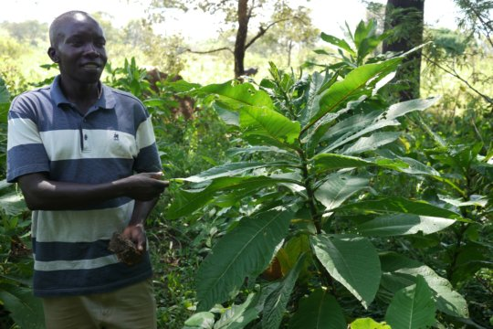 Ocaya, Forest Program Manager, with a local tree