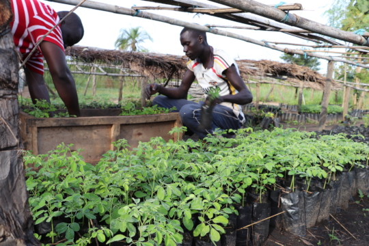Peter and David loading seedlings for villages