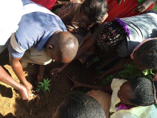 Women learning tree seedling care!