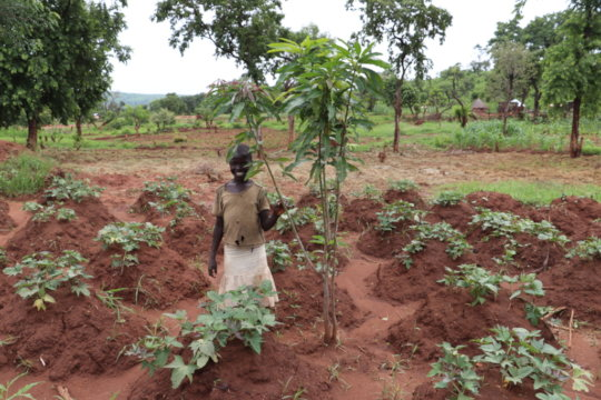 Adding trees to croplands
