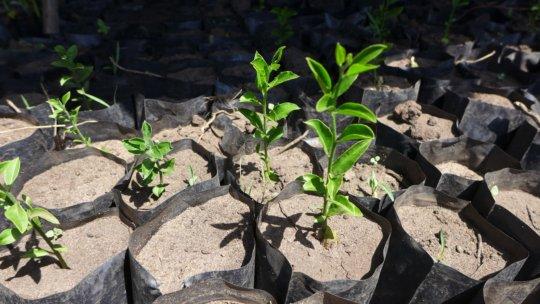 growing seedlings of native trees
