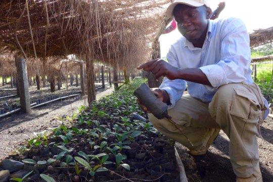 Ocaya with Shea Seedlings in the Nursery