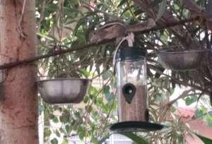Keep CALM & Save the Sparrow !!