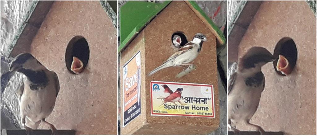 Happy Sparrow with Kids !!