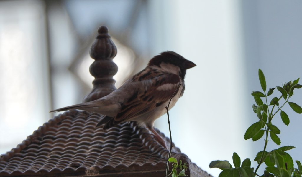 Save the innocent Sparrow Birds !!