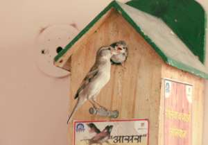 Sparrow feeding the child..
