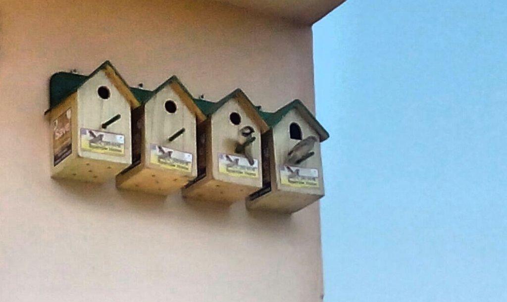 A Sparrow lover