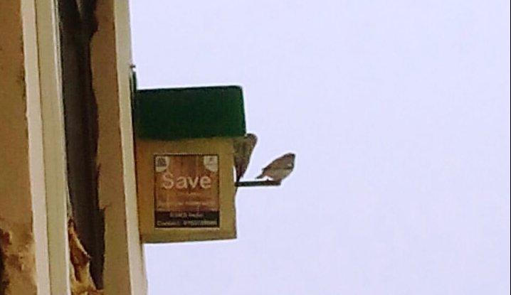 Sparrow home under the Aravalli mountain
