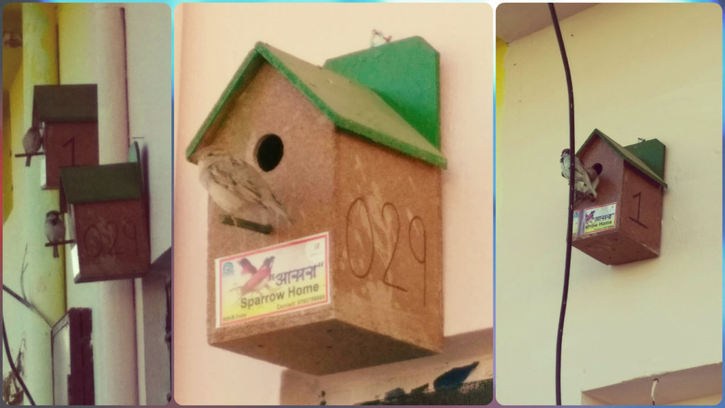 Melodious chirping of sparrow