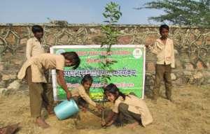 Plant A Tree Build A GreenLand !!