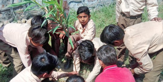 Adopt a Tree; Tree Plant with School Kids!!
