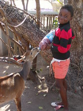 Daktari is to learn to take care of animals