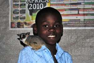Bongi and Chico the bushbaby