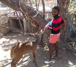 young girl feeding our bushbuck