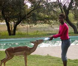 Gloria feeding our blind impala