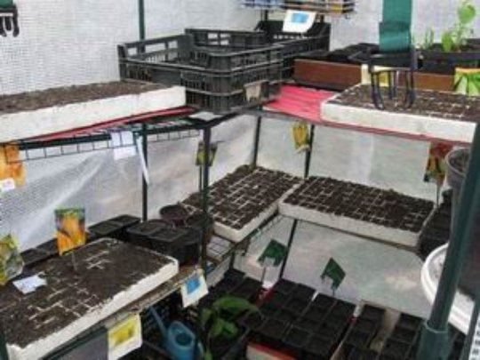 Pre-planting of vegetables & planted seeds