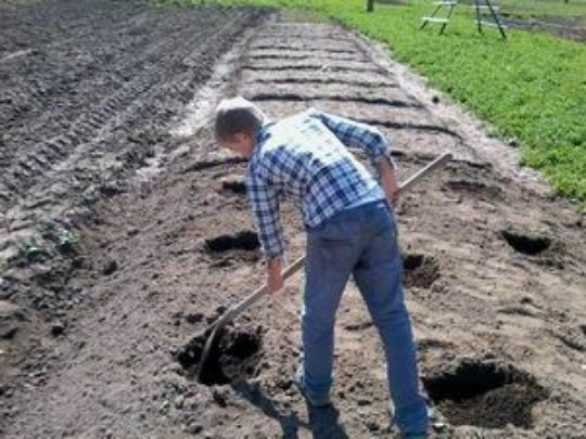 Preparing seed furrows and holes for vegetable