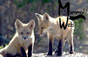 MammalWeb : Citizens Transforming Conservation