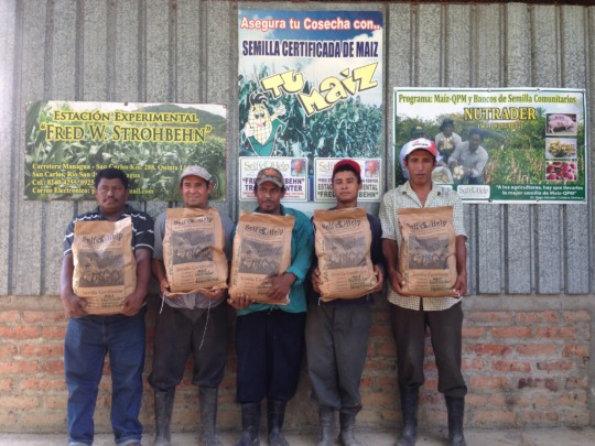 Ochomogo farmers holding the QPM they