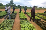 green communities project-reforestation