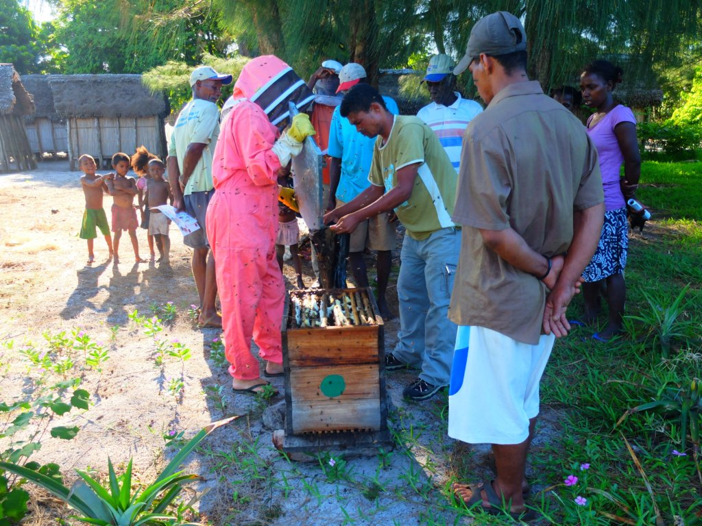 Safeguard Bees and Beekeepers in Madagascar