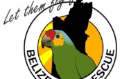 Education and awareness: Birds in Belize!