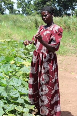 Ajok Betty picks greens from her Forest Garden