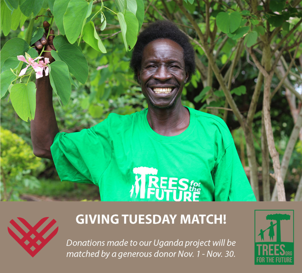 Help Plant 533 Families out of Poverty in Uganda