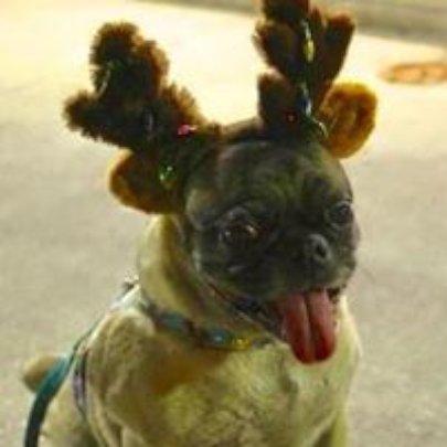Marley getting ready for Santa....