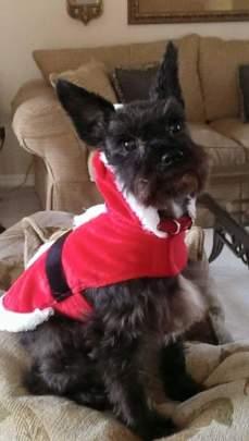 Heidi Aloy at Christmas time