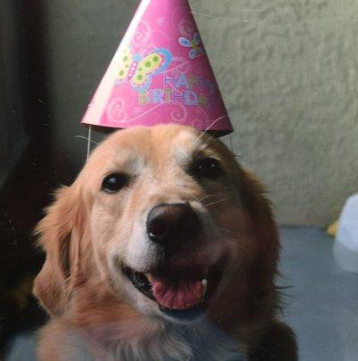 Bieber Adams in his Birthday Hat (we love this)