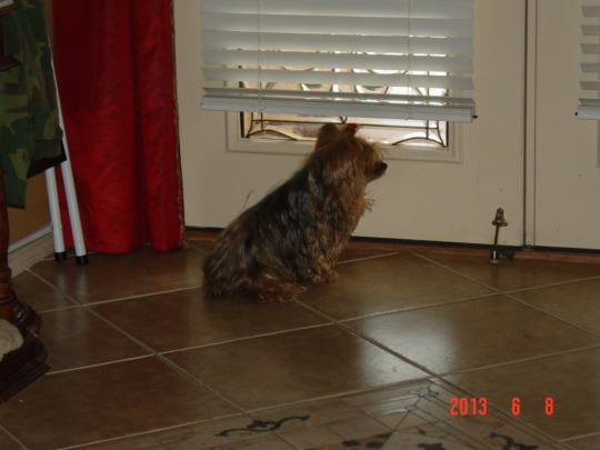 Sugar waiting for Nikki to get home