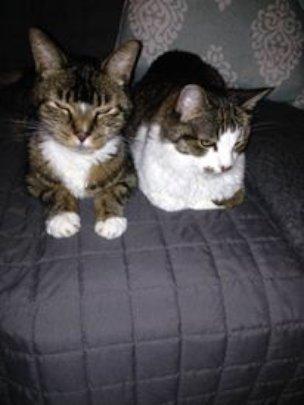 Maxwell and Bandit Solomon - Cindy's Boys