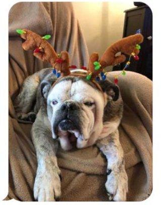 Brutus - most handsome reindeer we've ever seen!