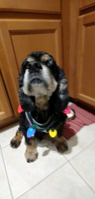 Sherman, being festive for the holidays!