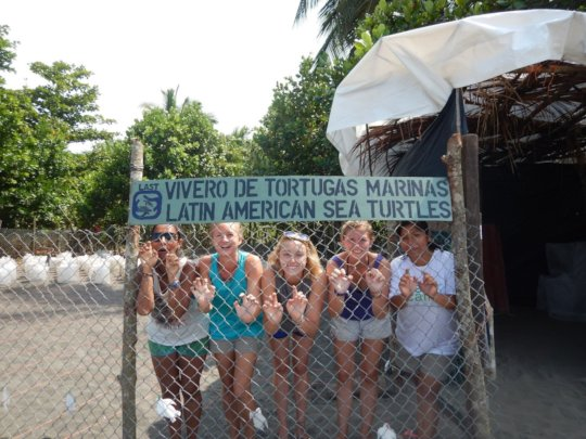 Our turtle hatchery
