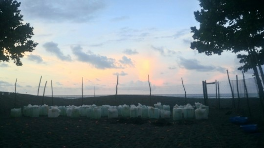 nests incubating in the hatchery at sunrise