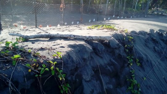 whats left of the beach in front of the hatchery.