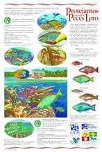 Herbivorous fish conservation poster (PDF)