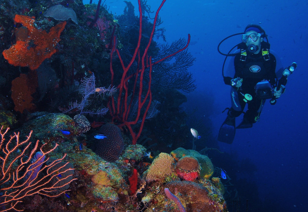 Save Mexico's Coral Reefs!