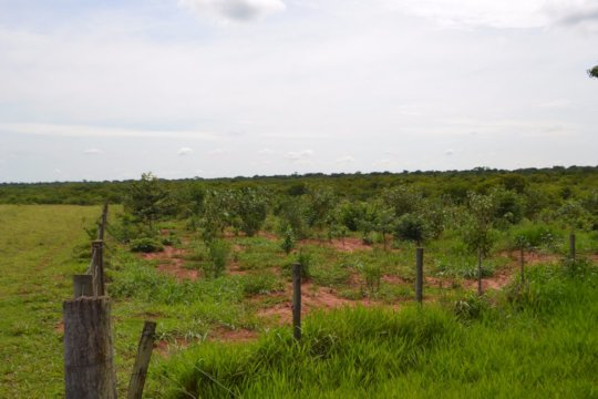 A restoration plot with young trees
