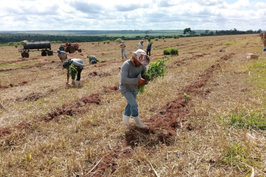 Planting at Estrela Farm.  IPE