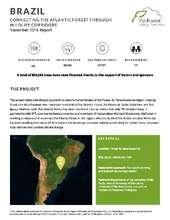 Brazil Planting Updat November 2016 (PDF)